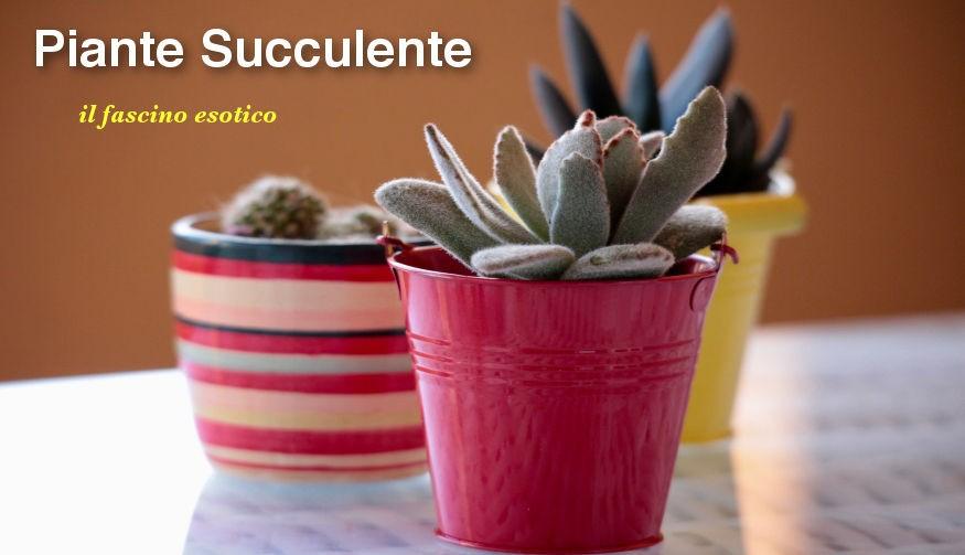 Piante Succulente o Grasse, il fascino esotico