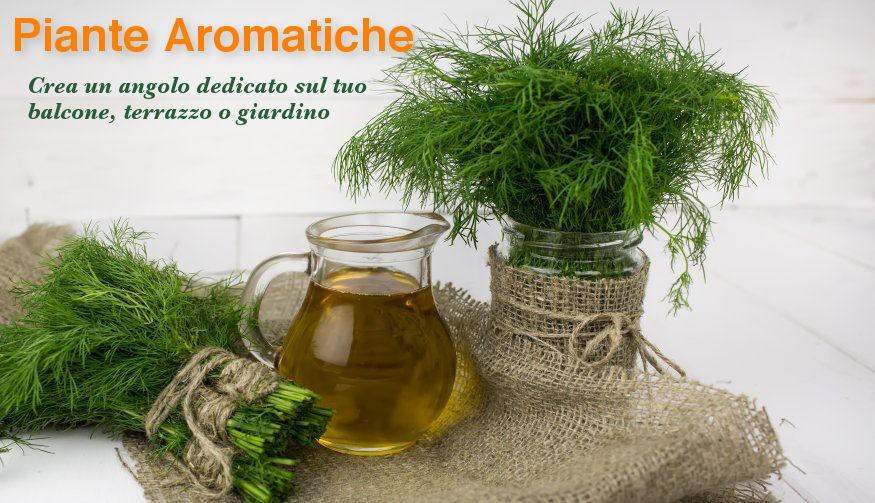 Piante Aromatiche: crea un angolo dedicato sul tuo balcone, terrazzo o giardino.